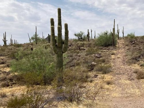 SOLD – 5 acres in Whispering Ranch, less than an hour northwest of the metro Phoenix area – SOLD