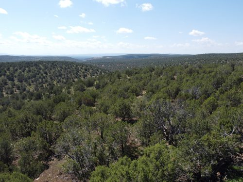 40 Acres in Westwood Ranch